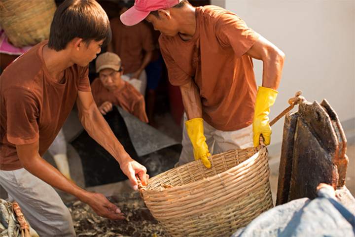 Công nhân vận chuyển cá vào nhà thùng