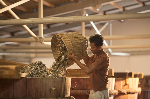 Nhân viên tiến hành ủ chượp cá